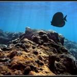Подводные пики