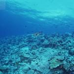 Жизнь в морских впадинах