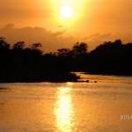 Мангровые болота