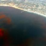 Химический состав океанов
